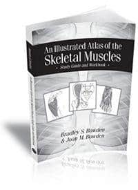 An Illustrated Atlas of the Skeletal Muscles: Study Guide and Workbook