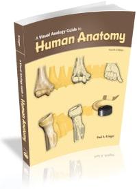 A Visual Analogy Guide to Human Anatomy, 4e