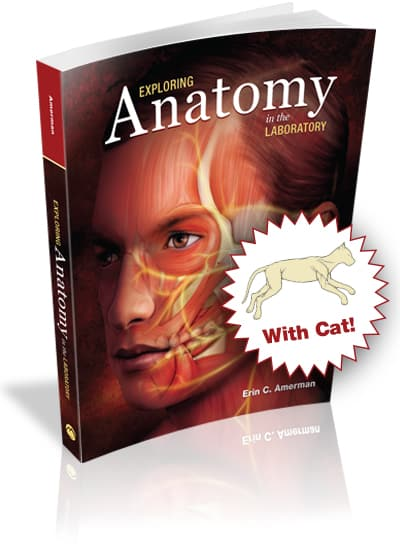 Exploring Anatomy in the Laboratory with Cat Dissection