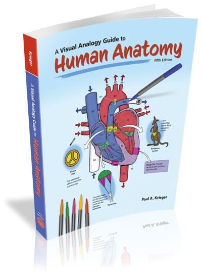 A Visual Analogy Guide to Human Anatomy, 5e
